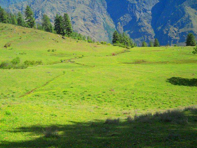 जंगल से लिया गया हरे कुदरती कारपेट का एक फोटो...