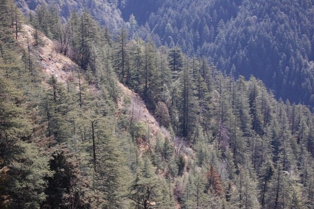 Countless trees in the hills - a godly arrangement to preserve eco-system.