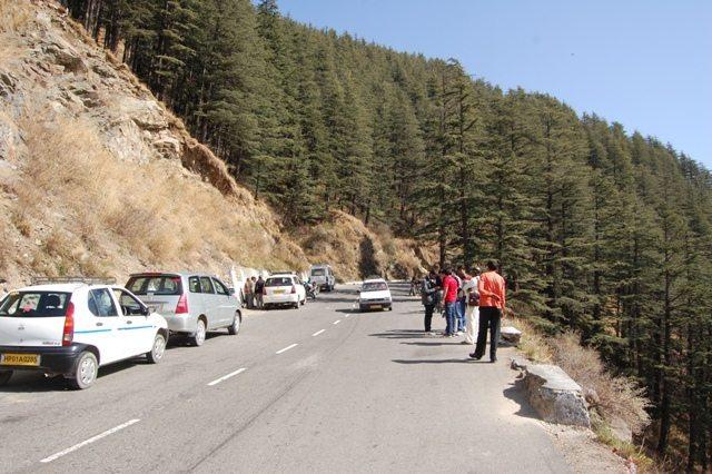 Shimla - Kufri road embellished with endless rows of pine.