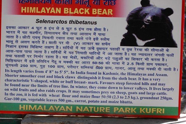 Small Zoo at Kufri, Shimla