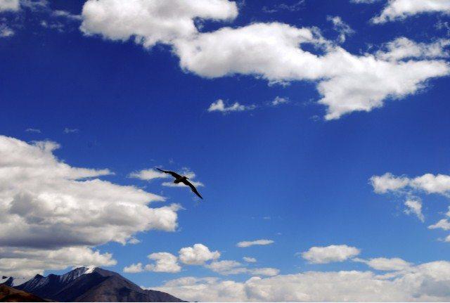 असमान मे उड़ता हुआ एक पक्षी।