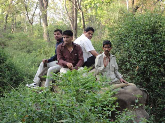 हाथी पर हमारी सफारी