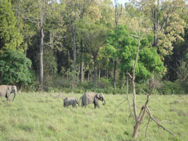 गेस्ट हाउस के पास हाथी