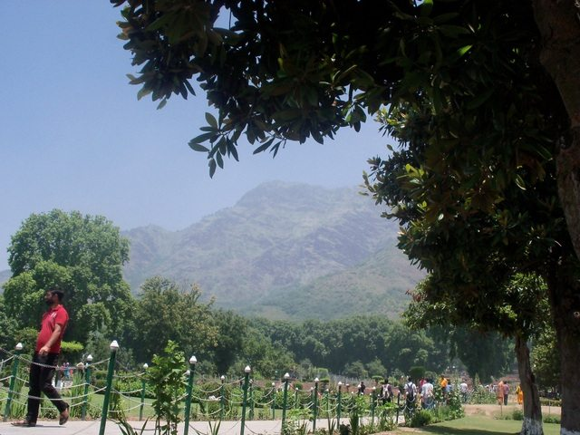 A view of Nishat Bagh