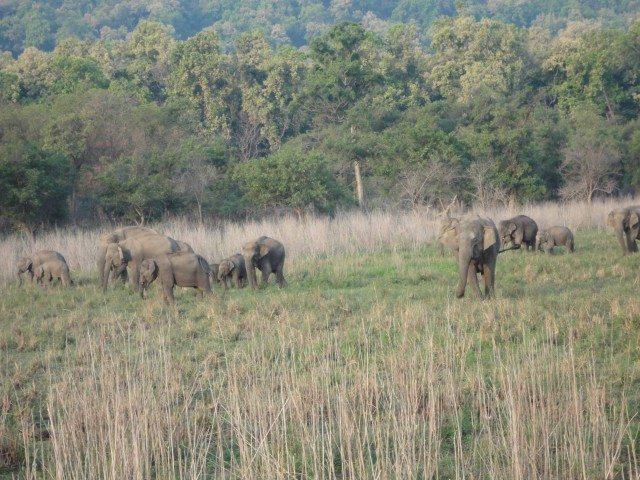 हमारी तरफ आते हुए एक हाथी