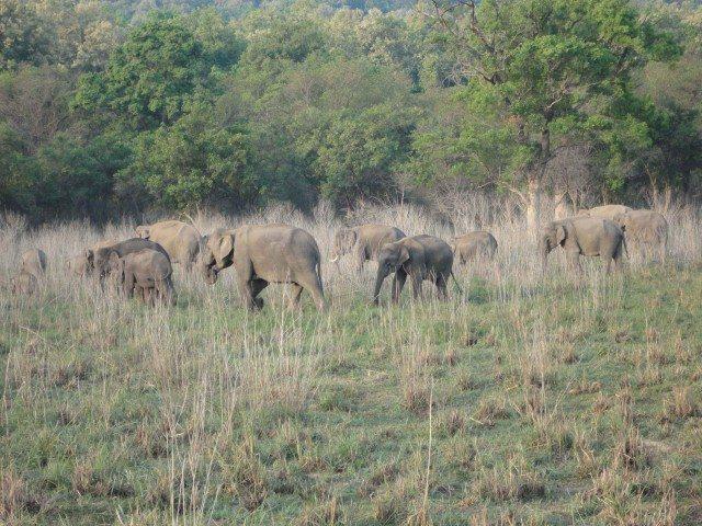 जाते हुए हाथियों का झुण्ड