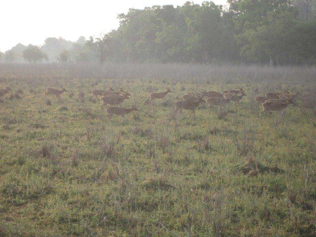 दौड़ लगते हुए हिरन