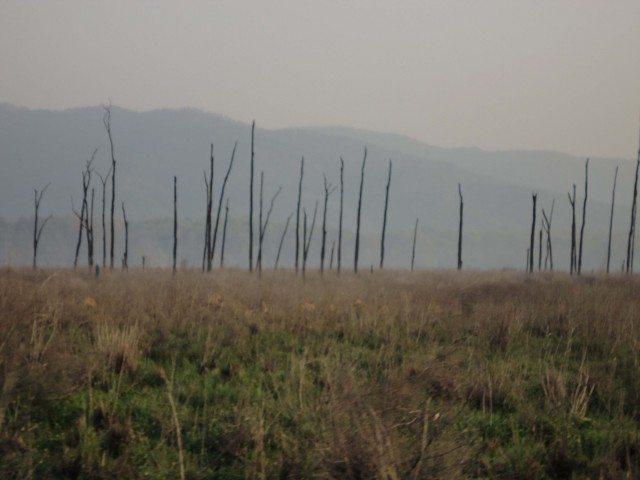 जले हुए पेड़ शायद काल फिल्म मे इन्ही को दिखाया गया है