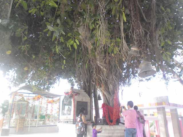 Banyan Tree jyotisar