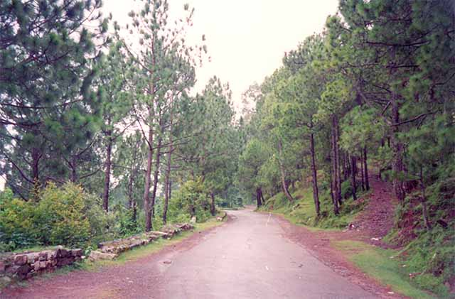 Kasauli - Unending walks
