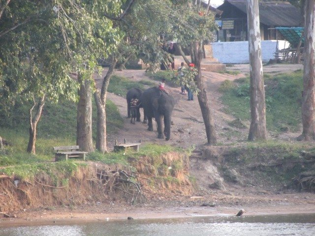 Views of the elephants and the camp on the opposite bank of the river