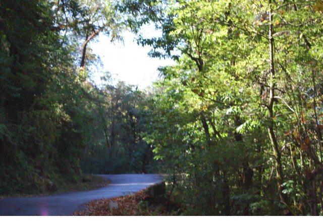 चोपता की ओर बढ़ते हुए। पतली सड़क और घने जंगल।