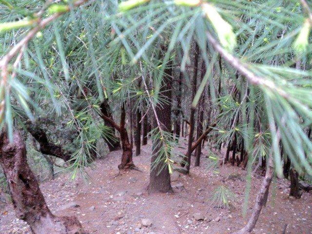 Prashar Lake – A Hidden Gem
