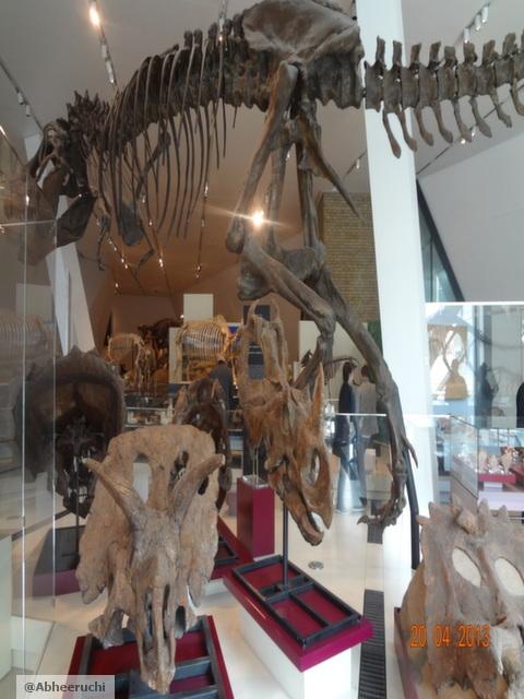 Dinosour Gallery