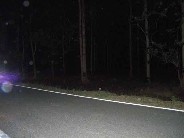रात का नजारा लेकिन हिरन तो आये ही नहीं फोटो मे