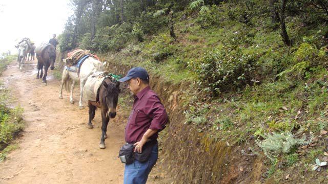 Crossing the Mule Pack