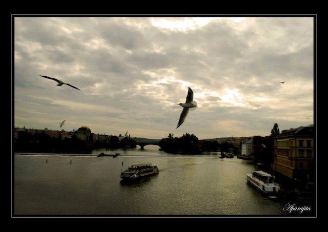 Evening with gliding birds