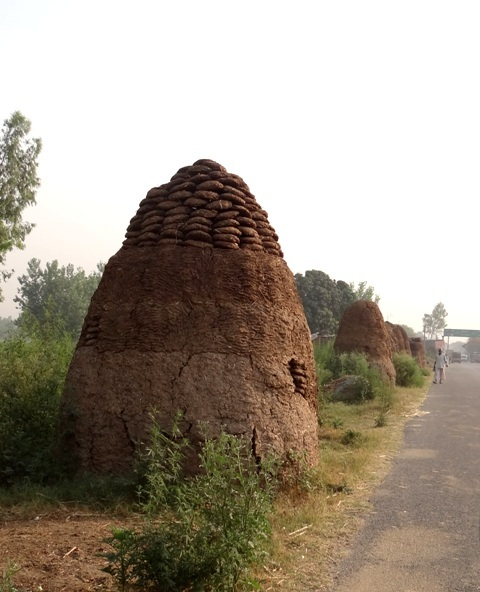 Interesting ways to store 'Kande' (cowdung cakes for fuel)