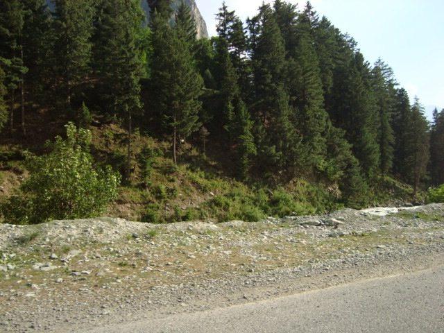 Road side landscape