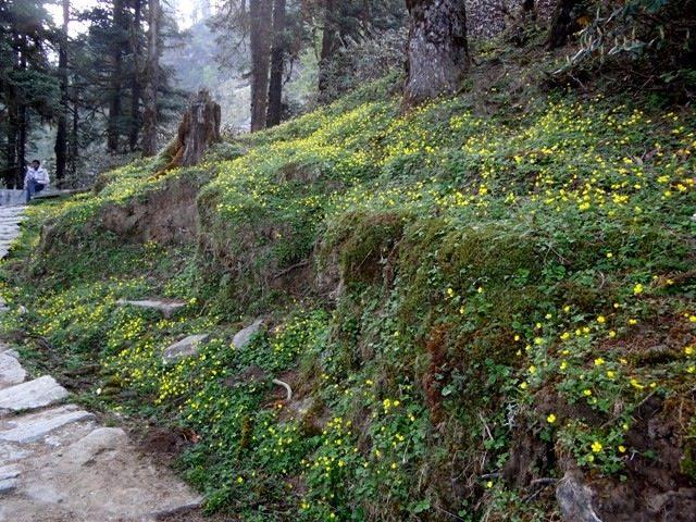 Blooming hillsides...