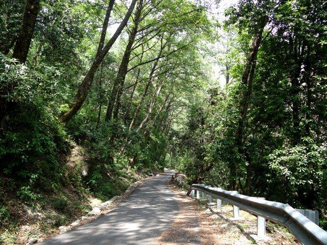 Dense forest near Kanchula Kharak