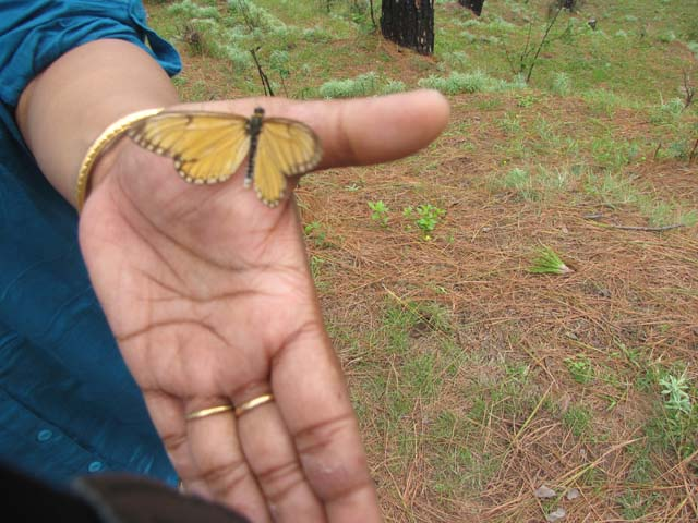 My wife was delighted playing with those butterflies
