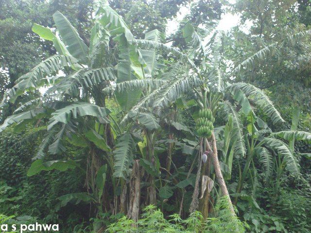 हरियाली से लदा-फदा गाँव