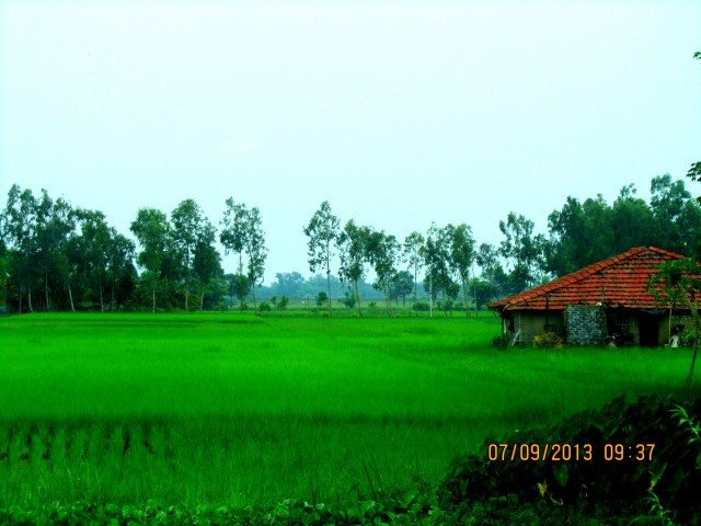 Green field by the NH117