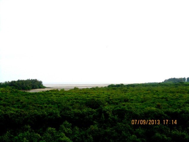 Mangrove forest from watch tower with Bakkhali beach at the distance