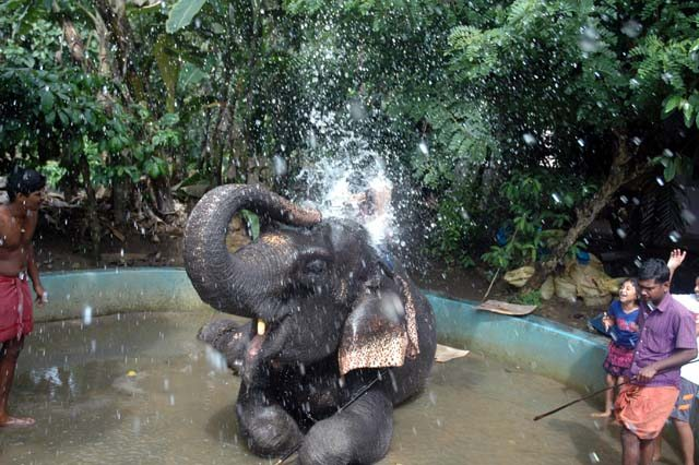 Elephant Shower bath