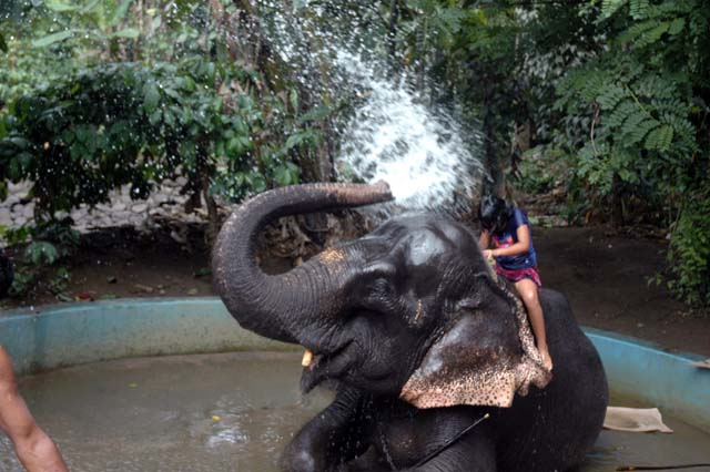 Elephant Shower bath