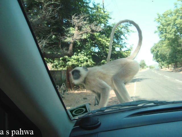 कुछ तो इतनी मित्रता गांठ लेते हैं कि कार पर ही सवार हो जाते हैं