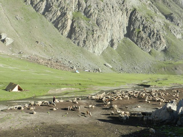 Grazing Meadow at Kargil