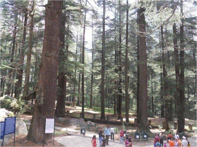 लम्बे लम्बे पेड़ देवदार के
