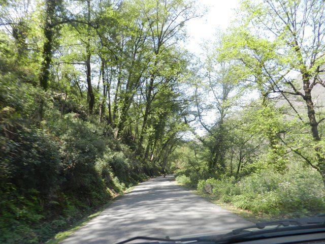 Good Road at Gwaldam