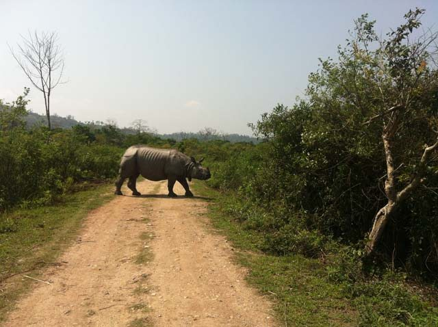 King of Kaziranga
