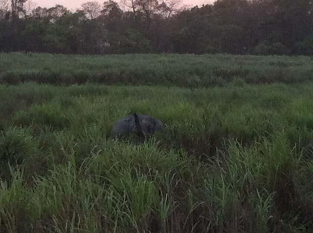 Elephant giving a hoot