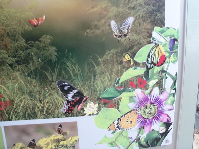 Some of te species at Butterfly park