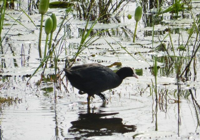 Black Duck Fishing