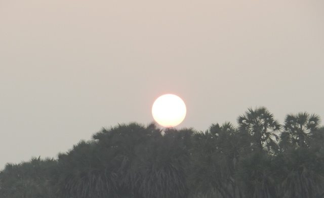 Sun set behind Hokka Bushes
