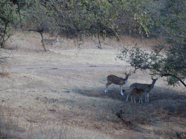 A cute deer family