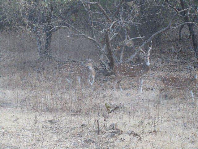 The deer family again