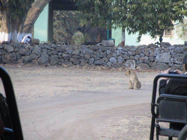A cub posing for the shutterbugs