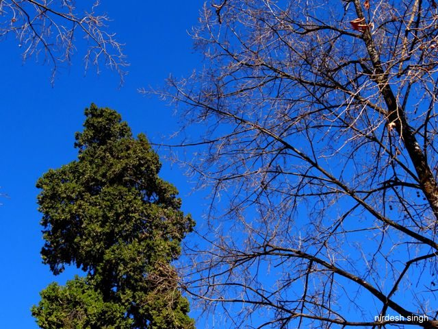Nainital - Phases of Life Reflected in Cobalt Blue Skies