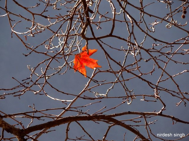 Nainital - The Last Leaf