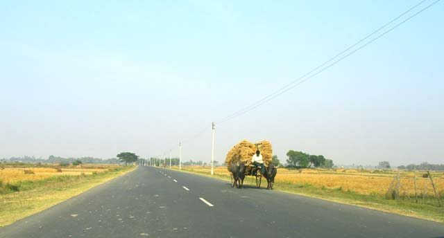 Bullock carts greeting us