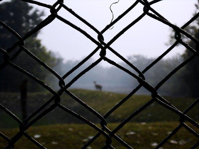 The lone dear at Dobanki