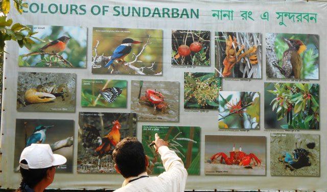 Colors of Sunderban