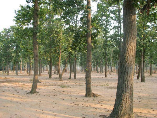 Sonajhuri Forest