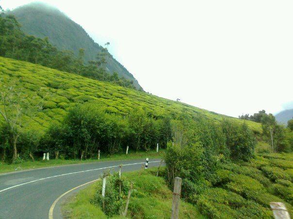 चाय के बागानों के बीच से रास्ता